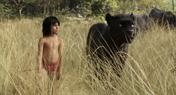 "Ab 14. April in den deutschen Kinos: ""The Jungle Book"" (Bild: Walt Disney)"