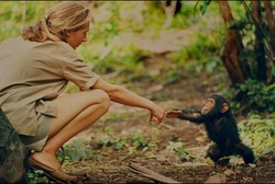 """Tierschützerin Jane Goodall in der Doku """"Jane"""" (Bild: mindjazz)"""