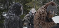 "Finaler Kampf: Cäsars Gefährten in ""Planet der Affen: Survival"" (Bild: Fox)"